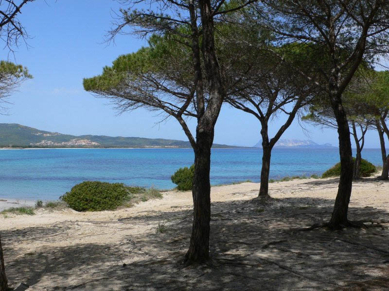 budoni pineta di s anna case vacanza sardegna On b b al mare budoni